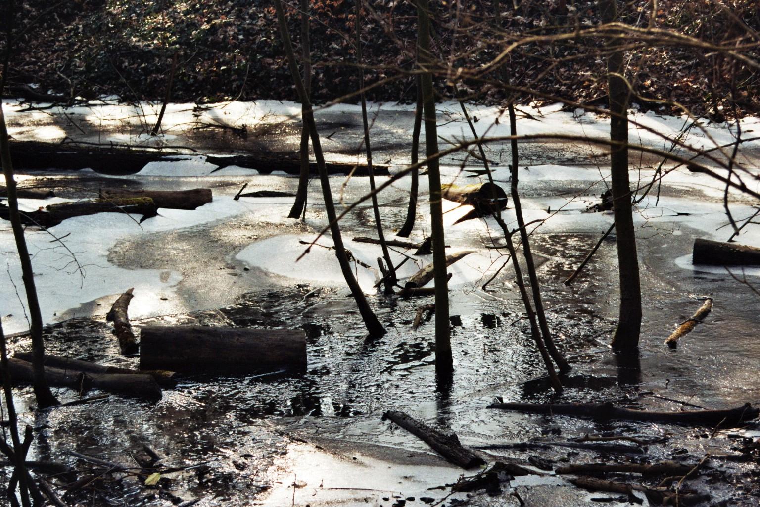 Eisige Sumpflandschaft