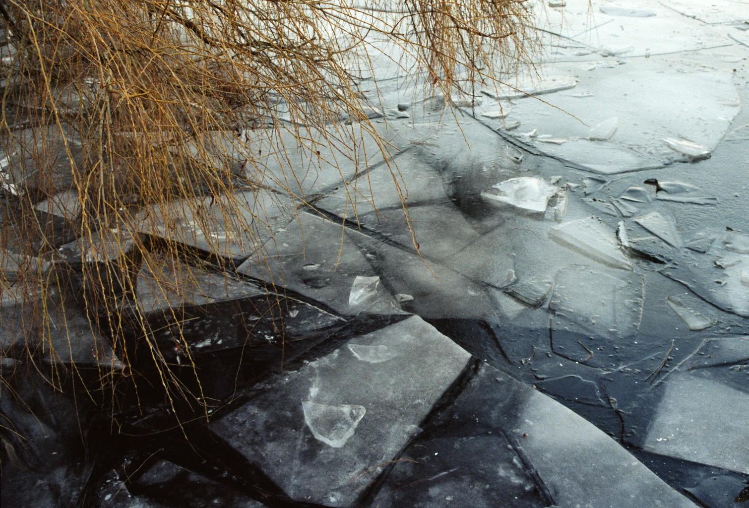 Trauerweide überm Eis
