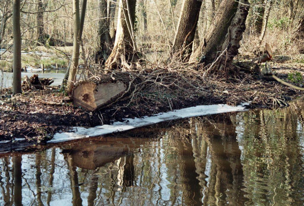 Verwunschene Orte (Kleiner Spreewald Park in Schöneiche bei Berlin) - Jahreszeiten Brandenburg Deutschland Europa nature gallery Oder-Spree Schöneiche Verwunschene Orte