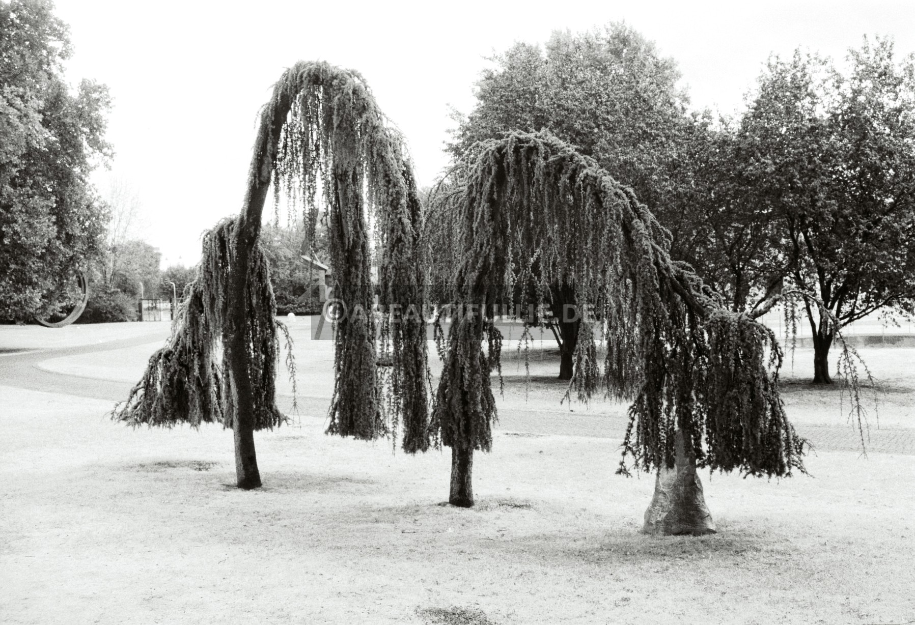 Skulpturenpark (2)