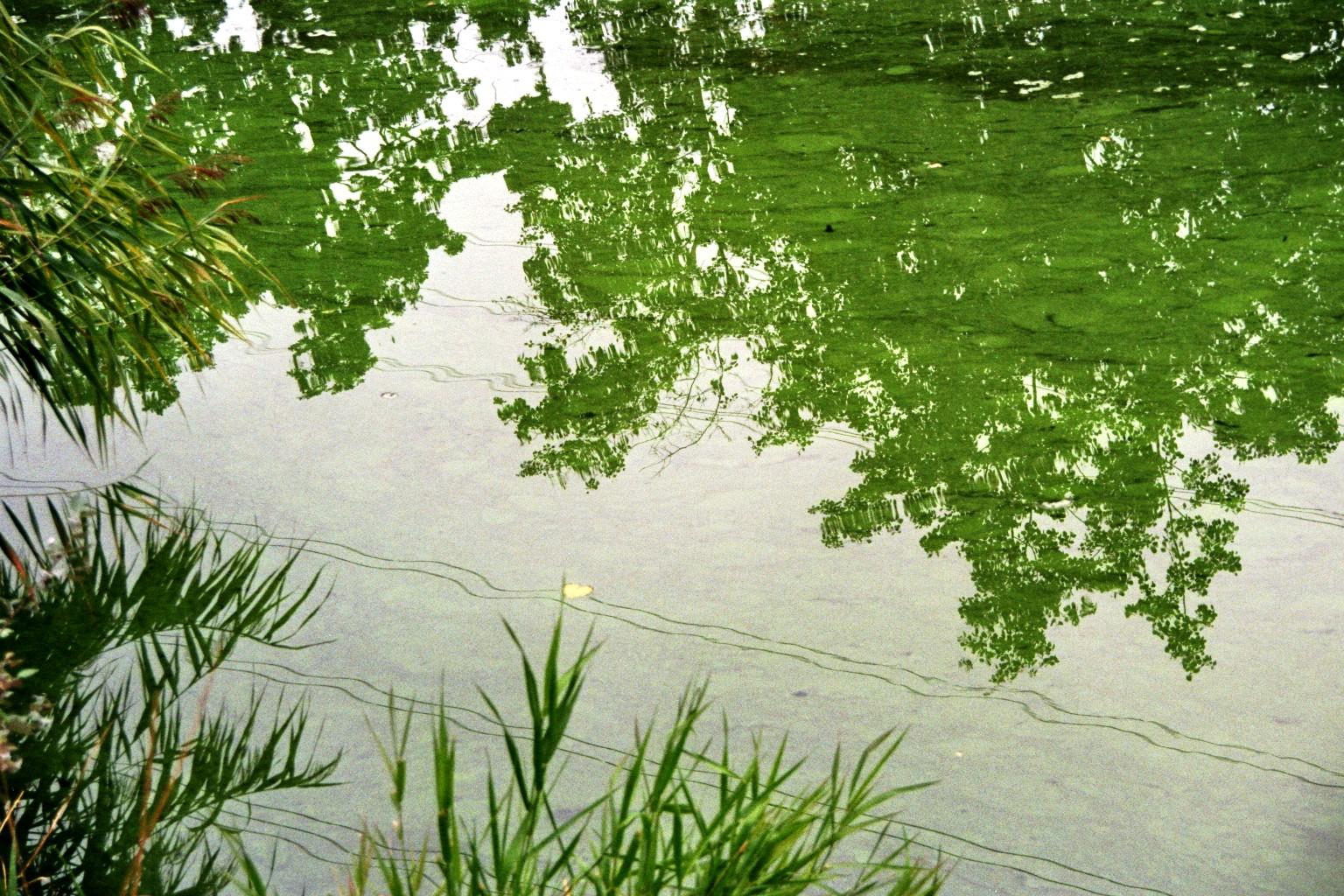 Grüner Spiegel