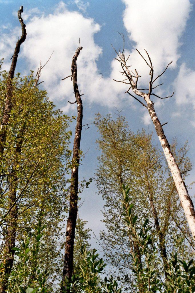 Verwunschene Orte: Am Klein Köriser See (Brandenburg) Brandenburg Dahme-Spreewald Deutschland Europa nature gallery Verwunschene Orte