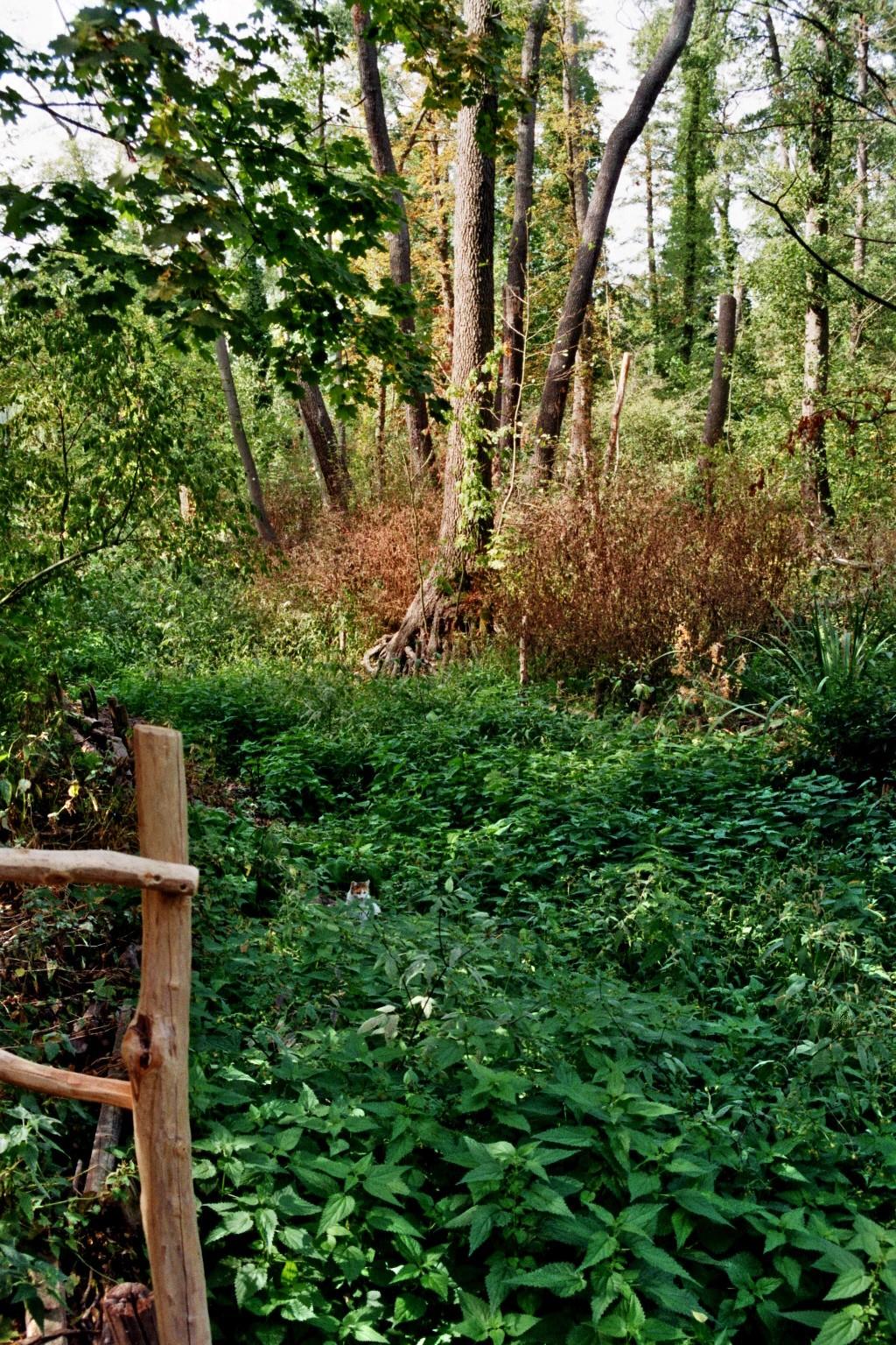 Spreewaldpark begrünt