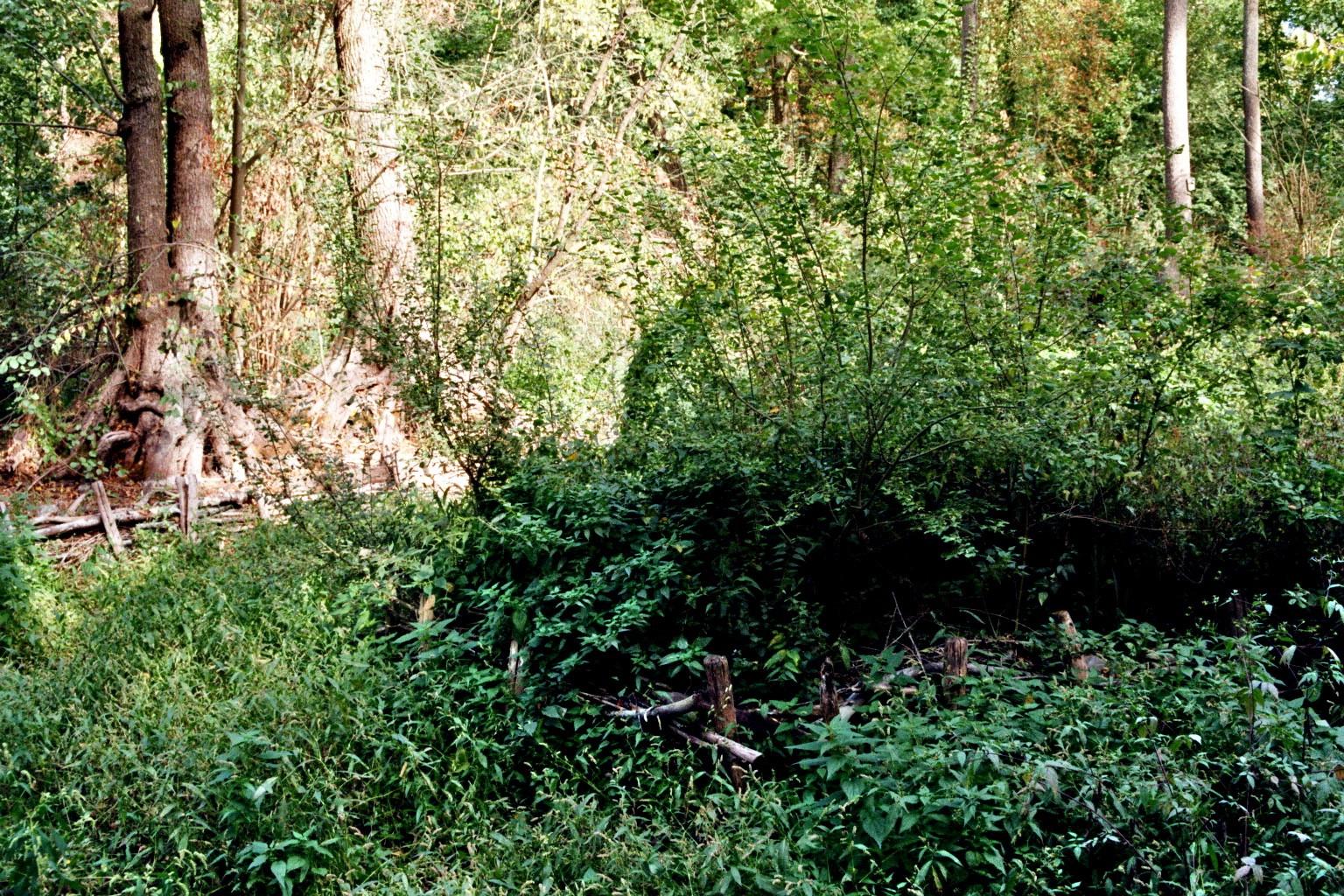 Spreewaldpark Steg