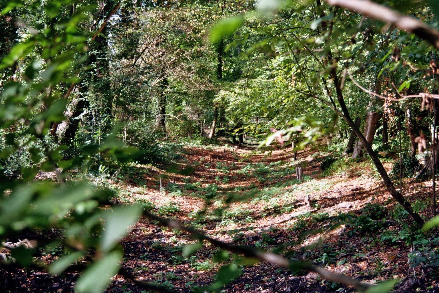 Spreewaldpark grüner Mühlengraben
