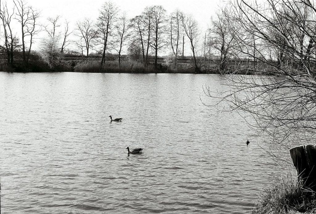 Allerlei Wasservögel
