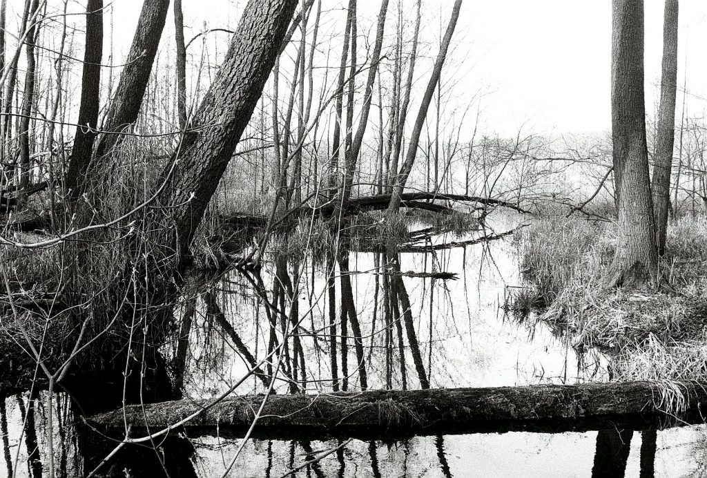 Der Großmachnower See zum Greifen nah