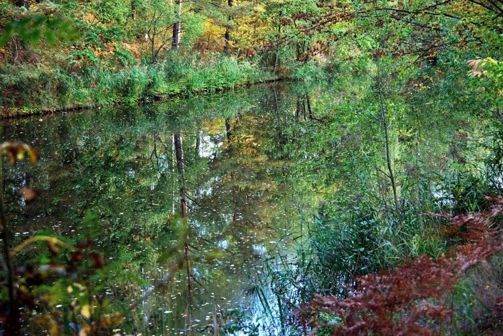 Grüner Kanal