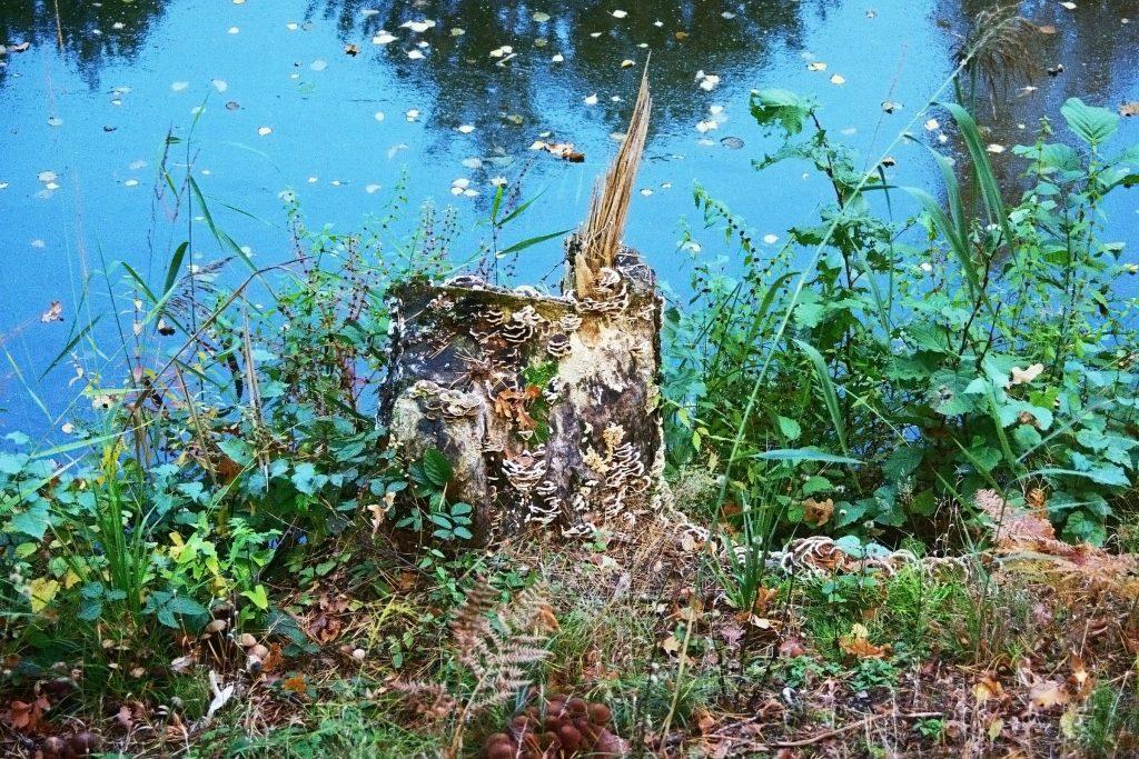 Verwunschene Orte (Neuköthen am Dahme-Umflutkanal/ Unterer Spreewald) Brandenburg Dahme-Spreewald Deutschland nature gallery Verwunschene Orte