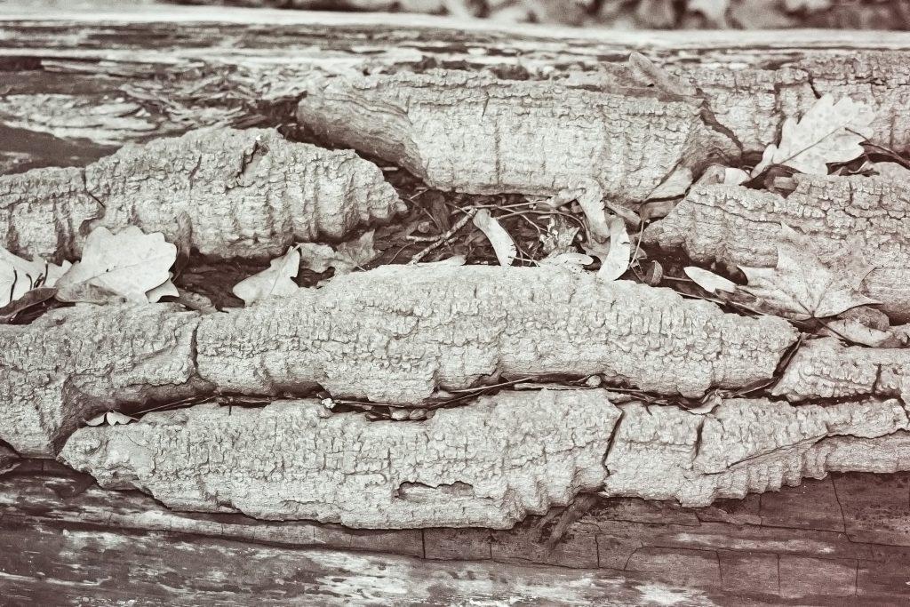 structures (wird weiter aktualisiert) miscellaneous nature gallery Strukturen