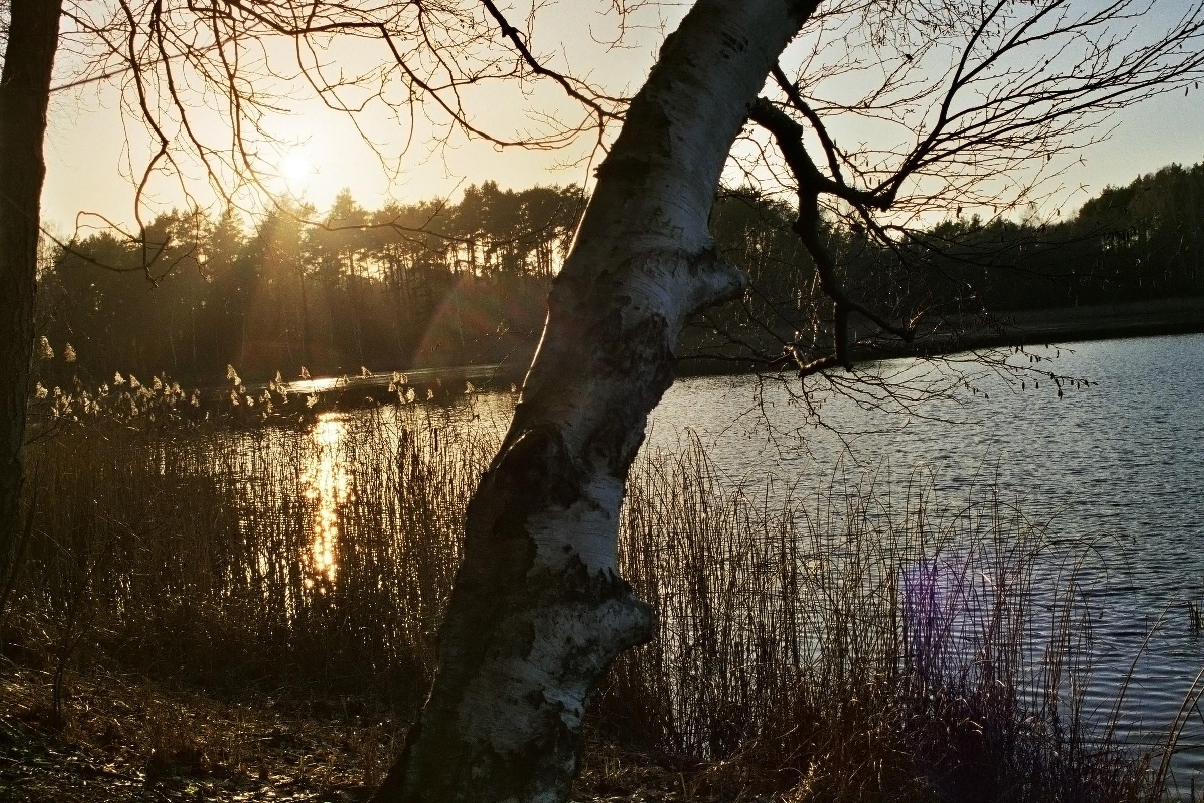 Sonnenuntergang und Birke