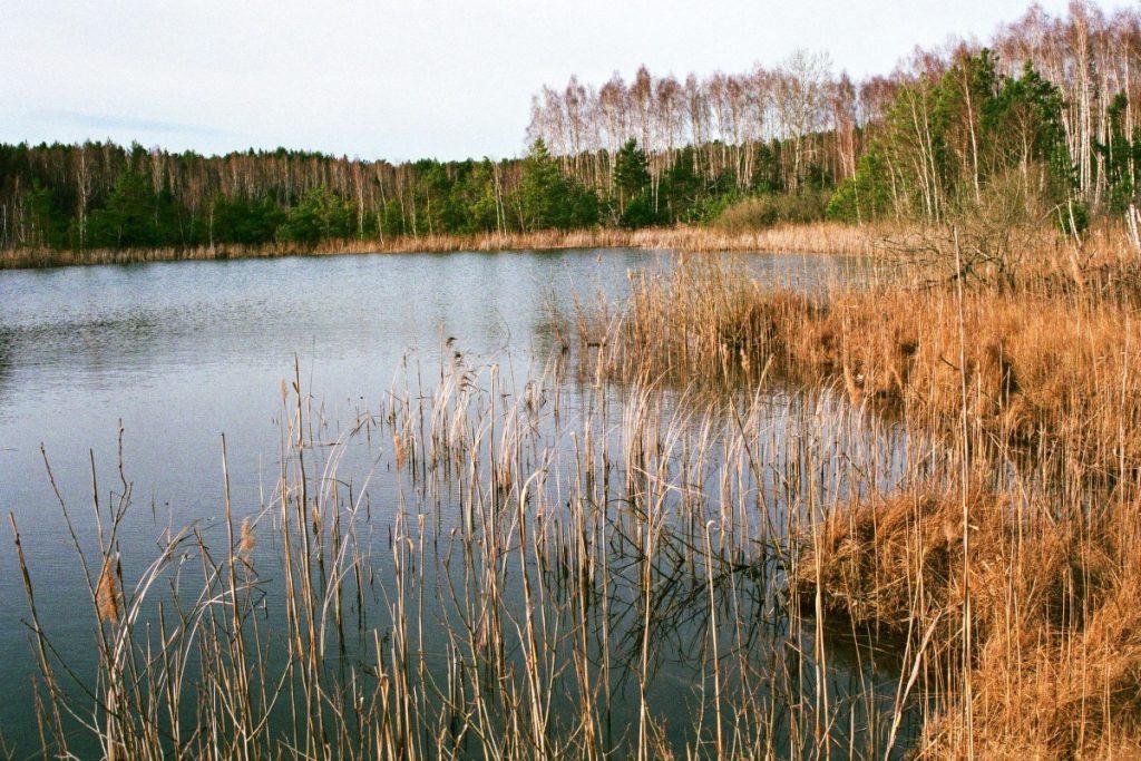 Im Unterholz - unterwegs in Brandenburg (wird fortgesetzt) Brandenburg Dahme-Spreewald Deutschland Europa nature gallery uncategorized Verwunschene Orte