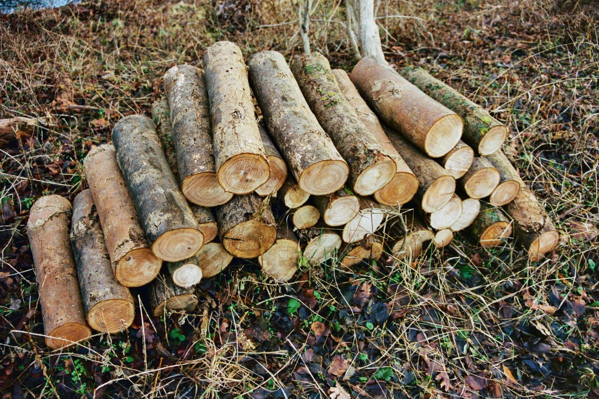 Holzstapel