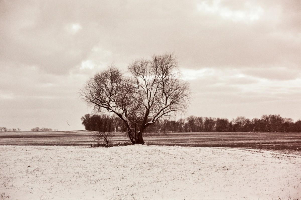 Schneefeld mit Baum