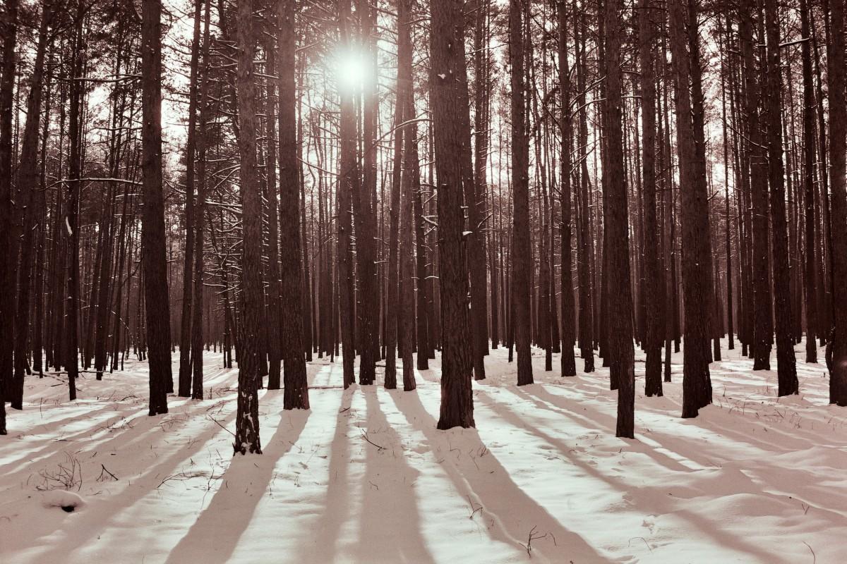 Wald in Pätz