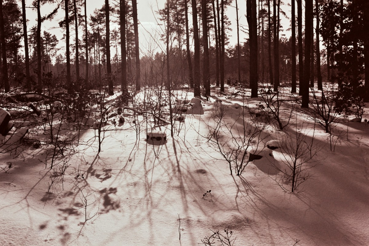 Waldlichtung