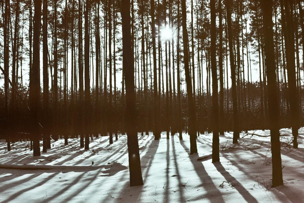 Wald in Pätz (2)